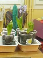 Etablissements de paris la langue orale travaill e dans for Planter un bulbe amaryllis